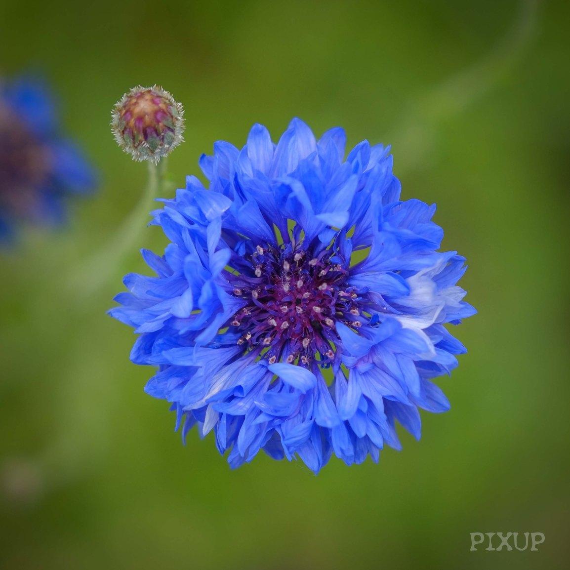 Les Fleurs de Le Manoir surSeine